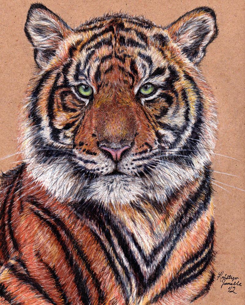 Tiger by KristynJanelle