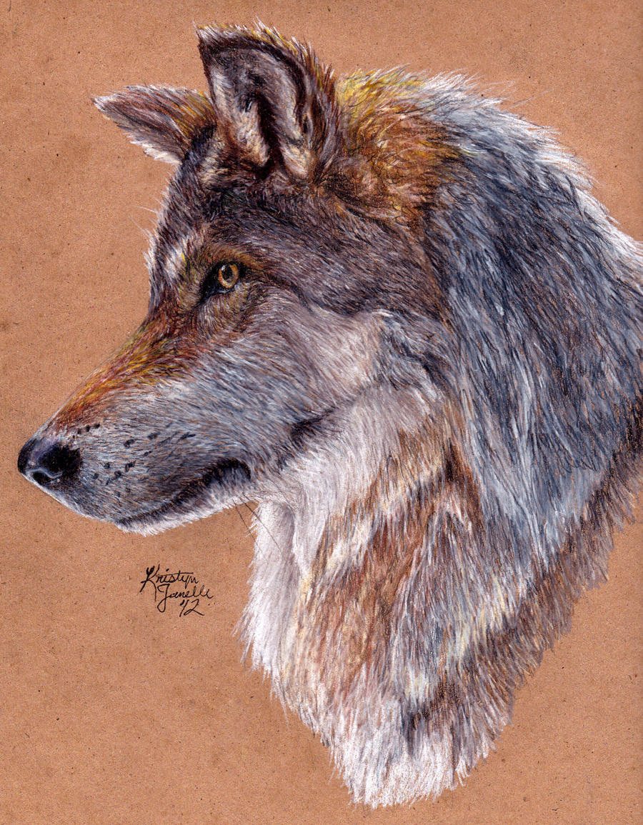 Grey Wolf - Redraw by KristynJanelle