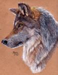 Grey Wolf - Redraw