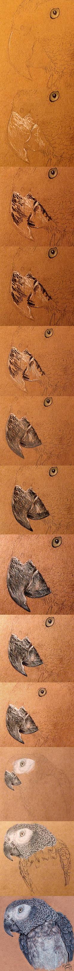 Drawing Birds - Beak Walkthrough/Tutorial
