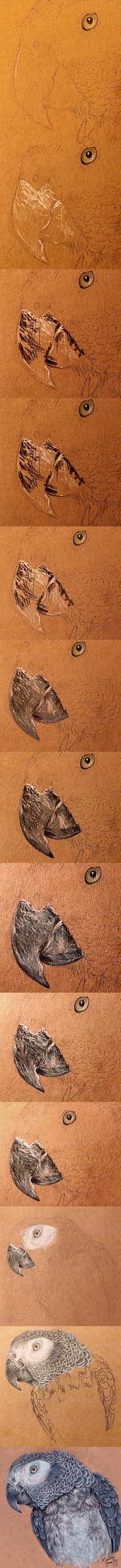 Drawing Birds - Beak Walkthrough/Tutorial by KristynJanelle