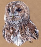 Tawny Owl by KristynJanelle