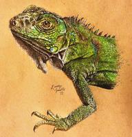 Iguana by KristynJanelle