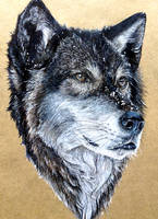 Wolf by KristynJanelle