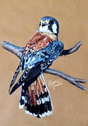 Kestrel Falcon by KristynJanelle