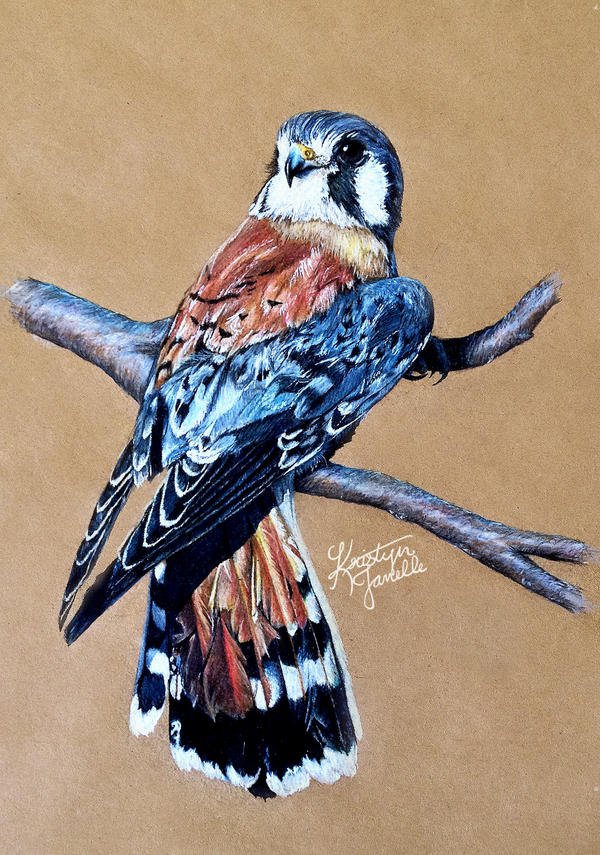 Kestrel Falcon by KristynJanelle