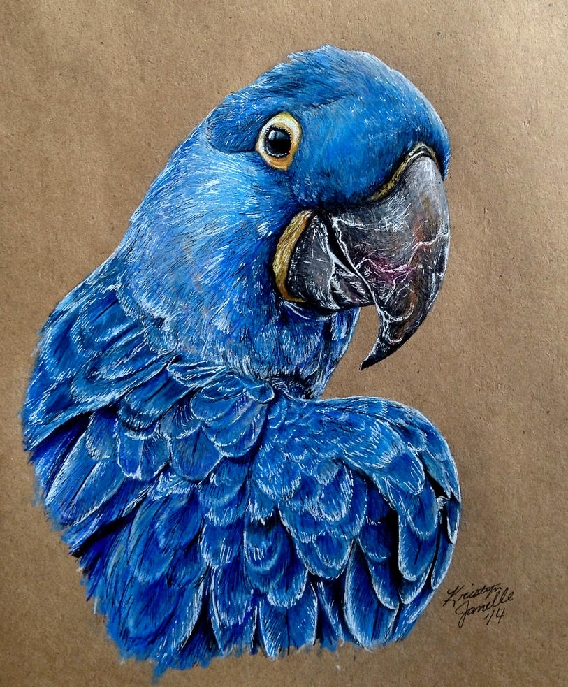 Hyacinth Macaw by KristynJanelle