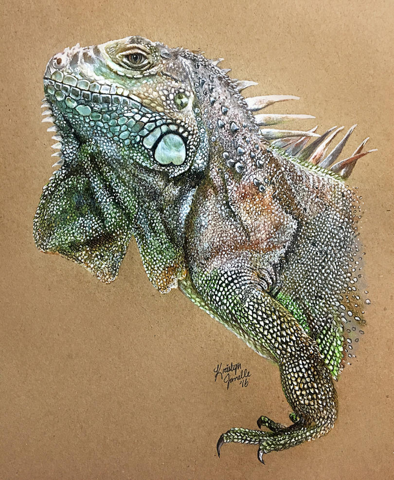 Remington the Iguana by KristynJanelle