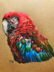 Green-Winged Macaw by KristynJanelle
