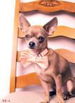 Fancy Pup by lollipops708