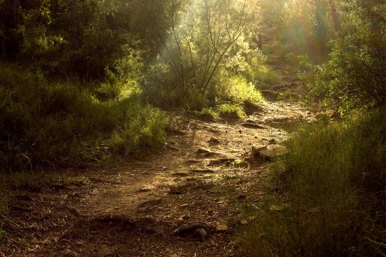 the path by mini---MIR