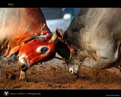 Bull 7 by vinayan