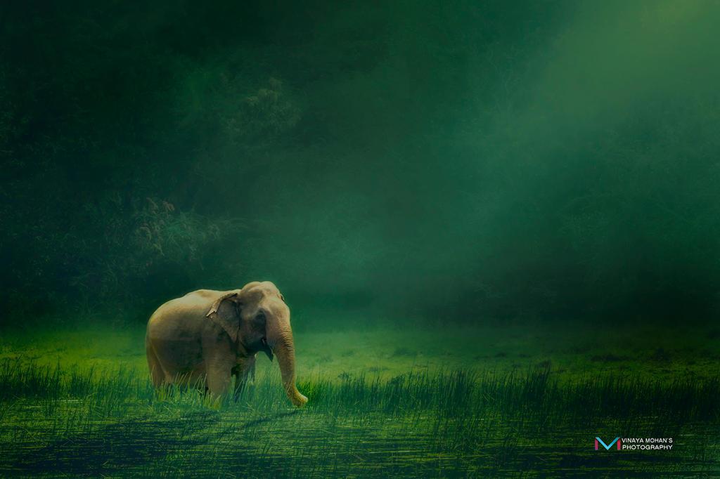 Elephant by vinayan