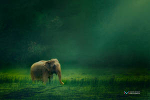 Elephant by vinayan