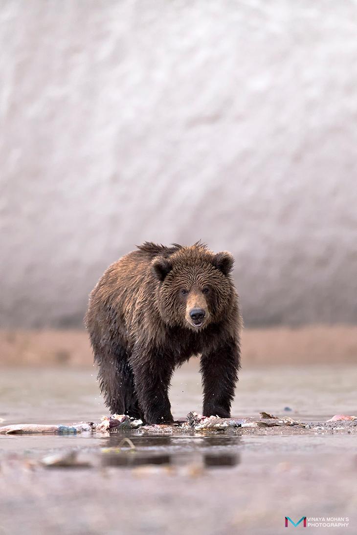 Bear Cub by vinayan