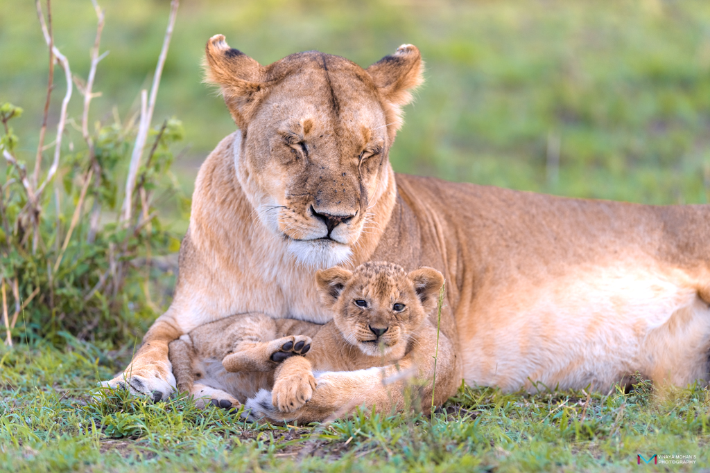 Mothers love by vinayan