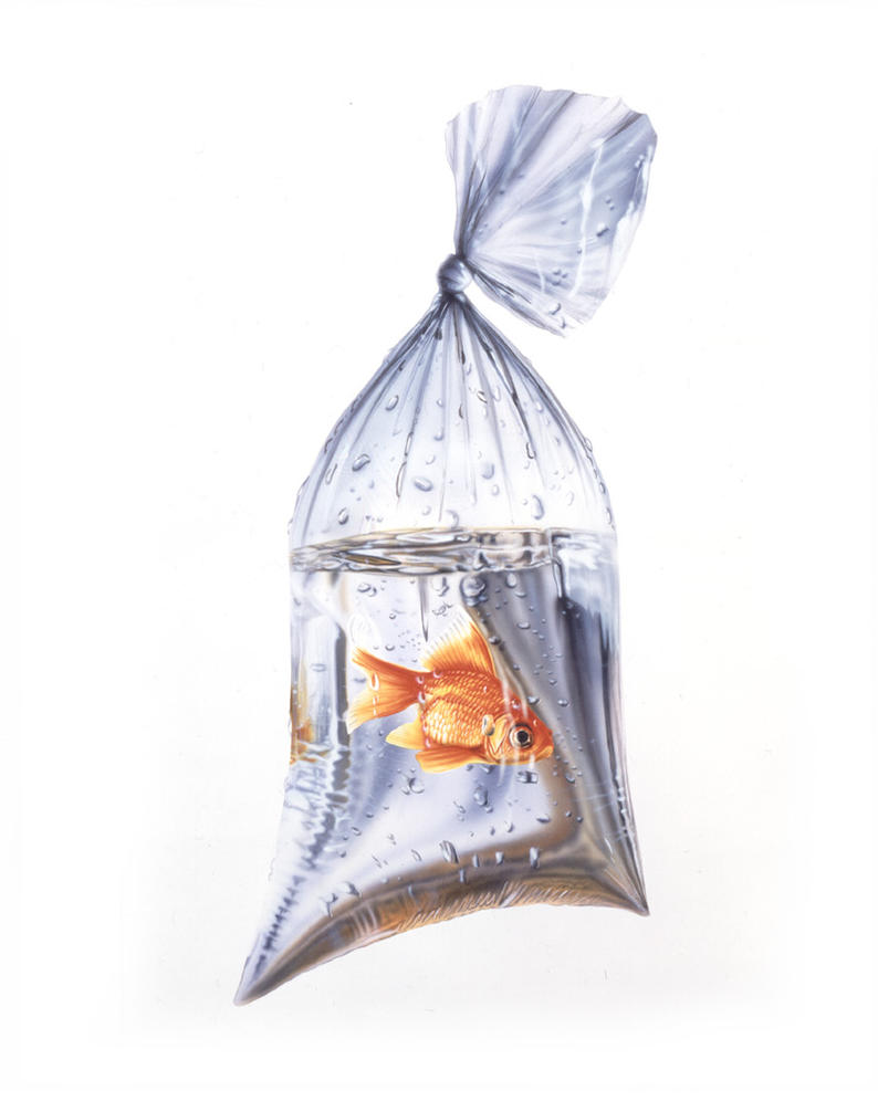 Fish in a bag by steve0671 on deviantart for Fish in a bag