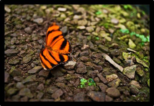 Lady Butterfly walk