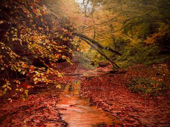 Autumn Walk - i