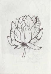 Lotus Flower by SriLankanStaringFrog