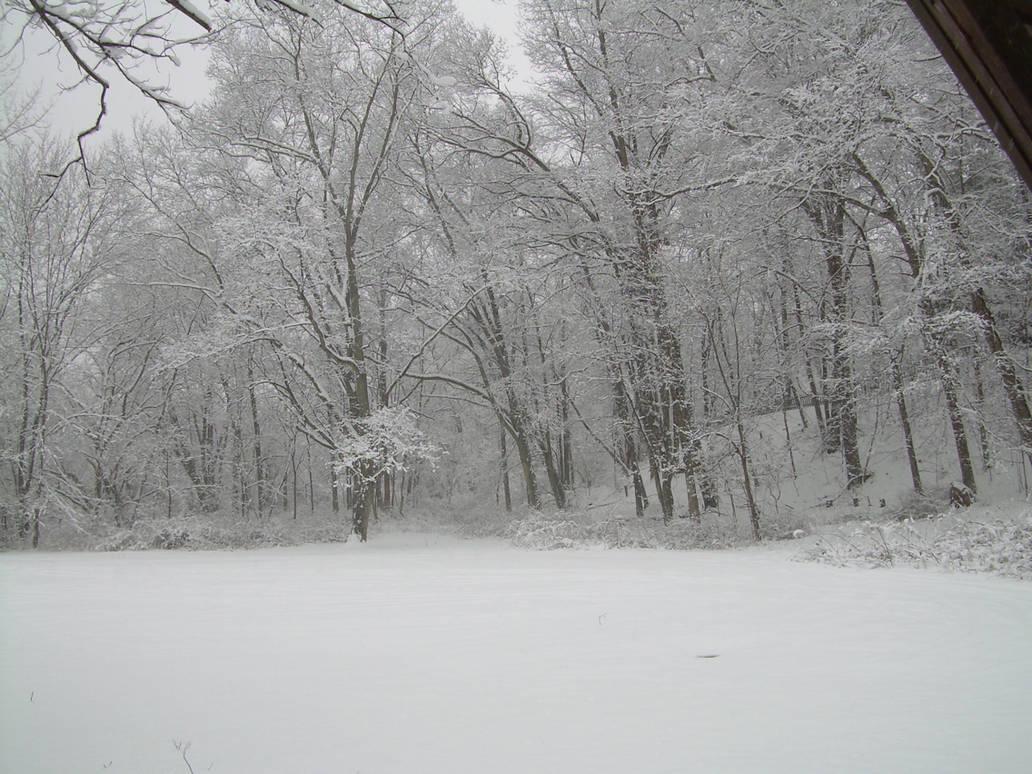 Winter Walk 20