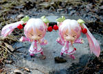 Cherry Twins