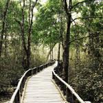 bridge to the mysteryland