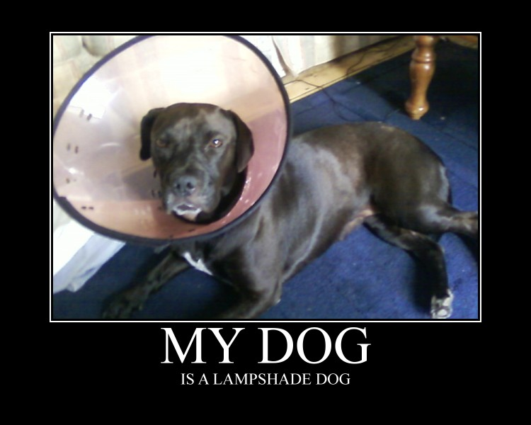 Lampshade dog by harry potter addict on deviantart lampshade dog by harry potter addict mozeypictures Image collections