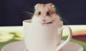 Cup O' Fur