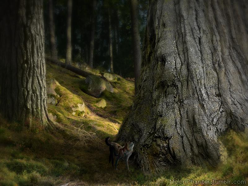 ~ Om Nordanskogen ~ Nordanskogen_2_by_moonphanter-dcf8bub