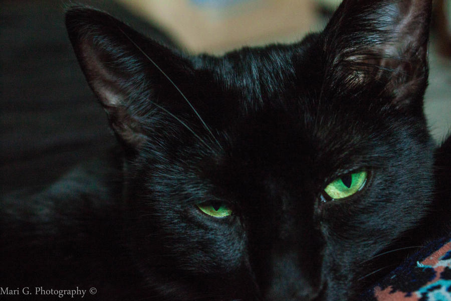 Onyx the Black Cat by AperturistOne