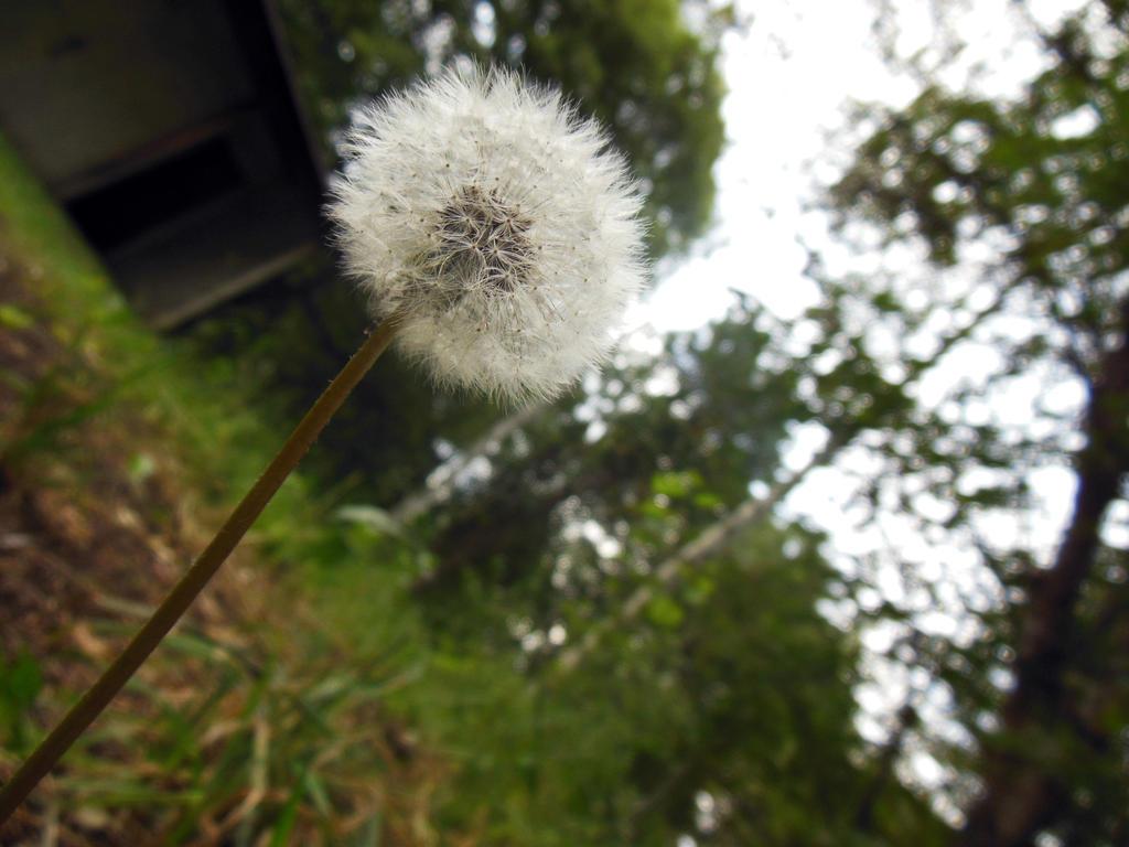 Wish Flower by MyRaInBoWs on deviantART