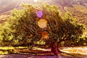Melting tree by kulesh