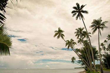 Palms in Rarotonga by kulesh