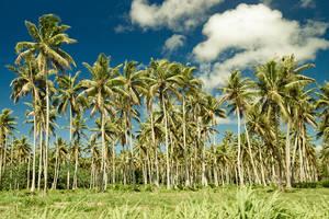 Palms by kulesh