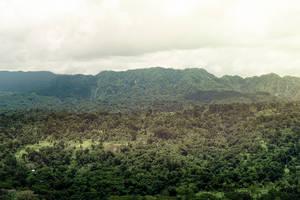 Jungle by kulesh