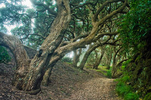 Karekare Beach Forest by kulesh