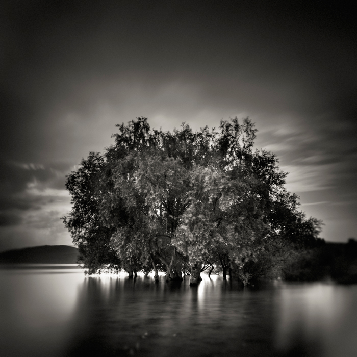 Flooded Tree by samuilvel