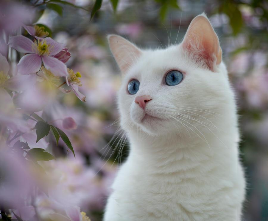 Springtime by SarahharaS1