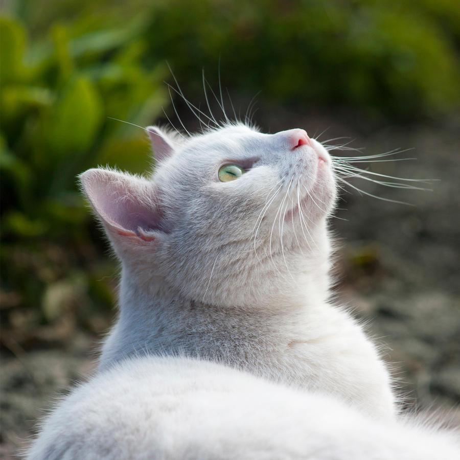 Bird watching by SarahharaS1