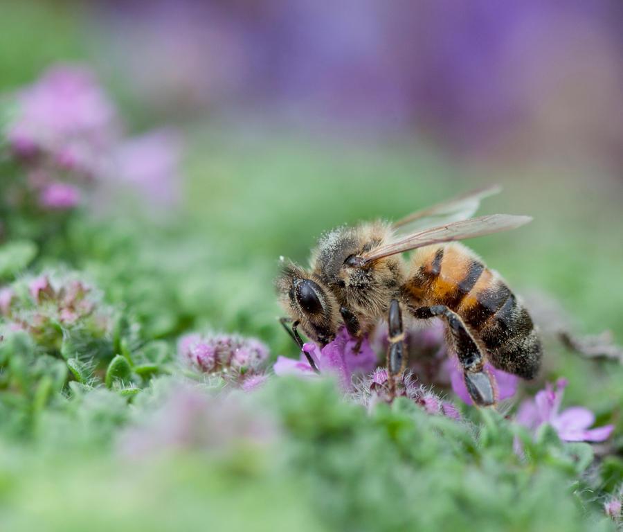Relishing honeybee by SarahharaS1