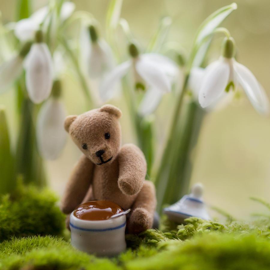 Honey picnic by SarahharaS1