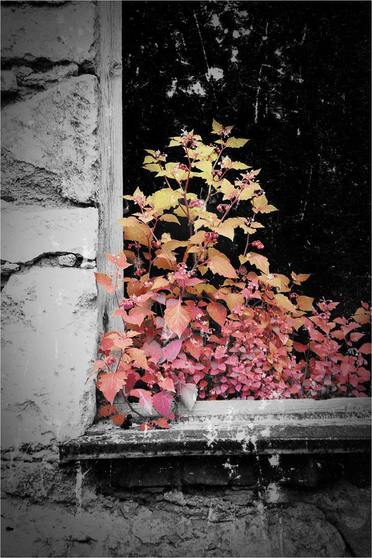 Razbijemo monotoniju bojom - Page 3 Window_by_PinkTentacle666