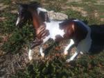 Harper in the Pasture