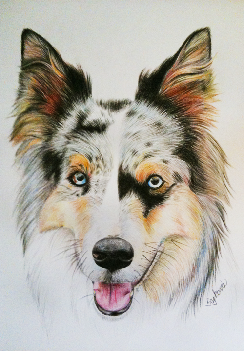 blue merle border collie by dzekizna