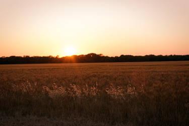 Texas Fields by paralytix