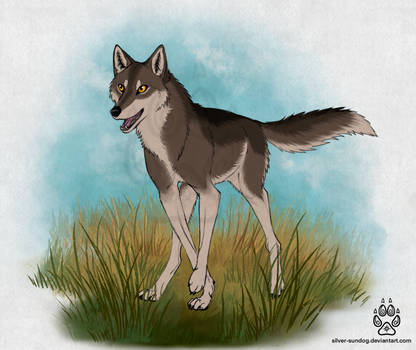 Wolf trot
