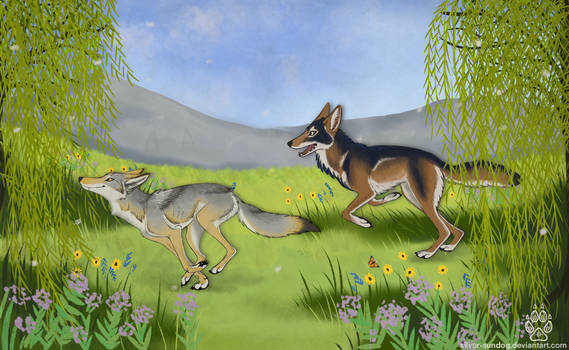 Coyotes in the willows