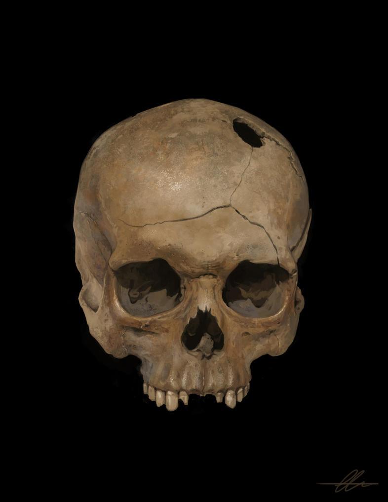 Study - Skull01 by SnakeToast