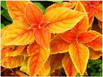 Orange Paradise by KellyManaghan